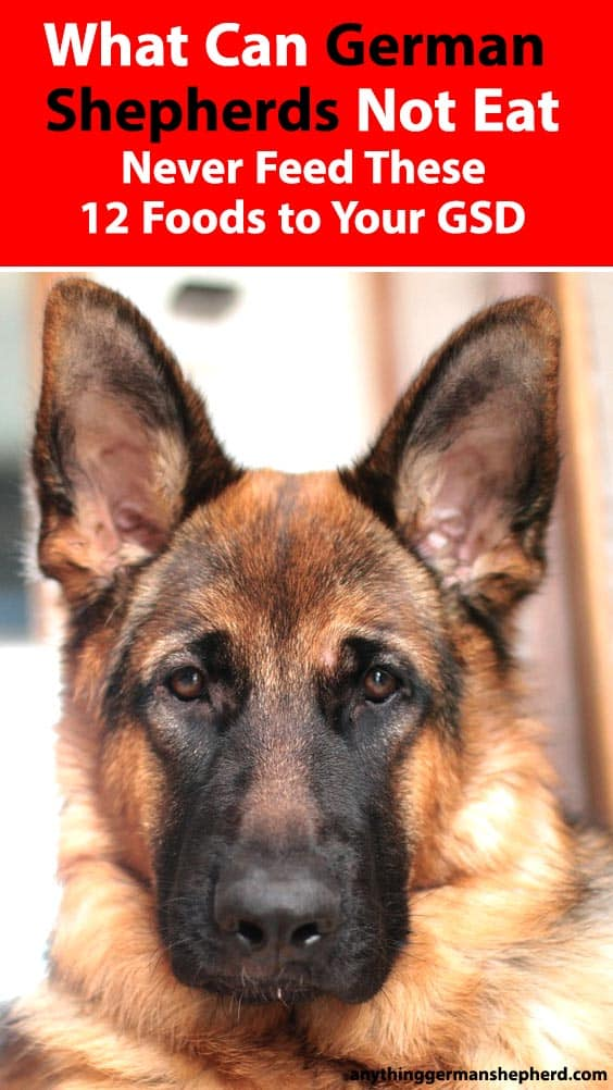 What Can German Shepherds Not Eat