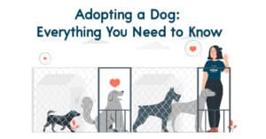 Adopting a Dog Everything You Need to Know