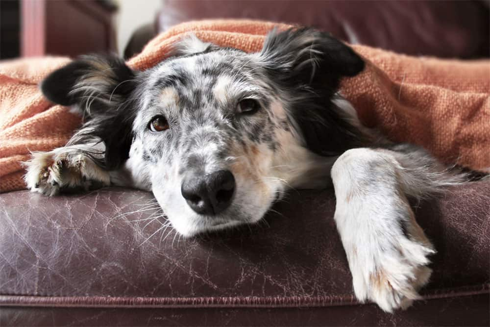 What-Anti-Nausea-Medication-Can-Dogs-Take-Which-Over-The-Counter-Medications